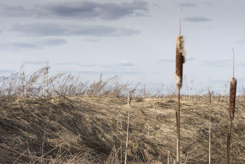В прошлом году трава ` s стоковые изображения