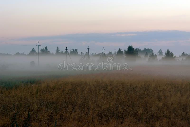 В пшеничном поле на туманном утре лета стоковая фотография