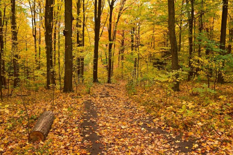 В древесинах осенью стоковая фотография rf