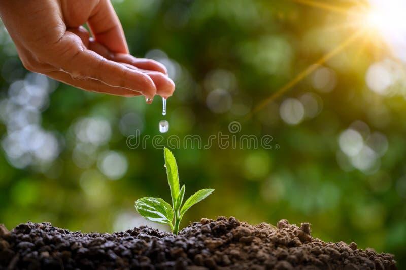В руках деревьев растя саженцы Дерево удерживания руки предпосылки зеленого цвета Bokeh женское на консервации леса травы поля пр стоковые изображения rf