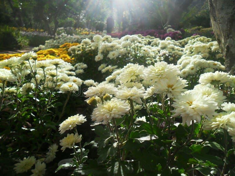 В саде стоковое фото rf