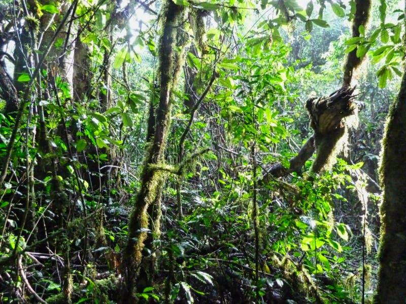 в середине джунглей стоковые изображения