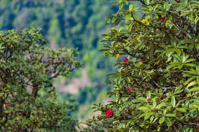 В состав природы леса стоковые изображения