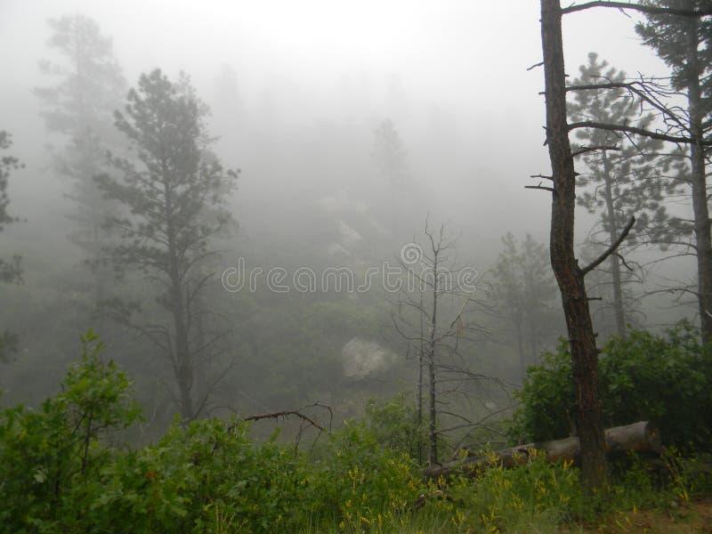 В тумане стоковая фотография rf