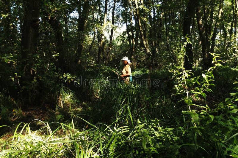 В фантастичном лесе реликвии стоковые фото