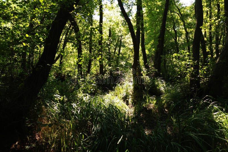 В фантастичном лесе реликвии стоковое фото rf