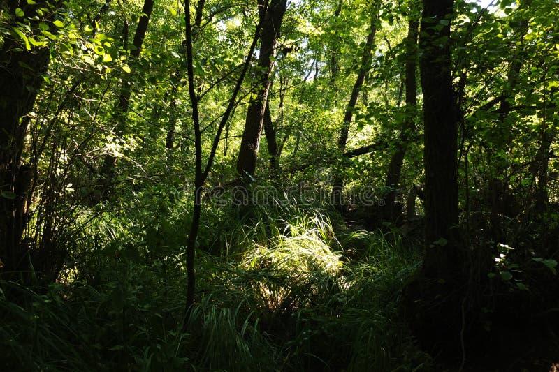 В фантастичном лесе реликвии стоковое изображение