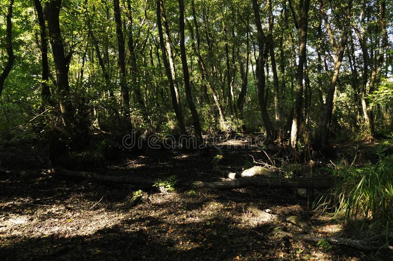 В фантастичном лесе реликвии стоковые изображения rf