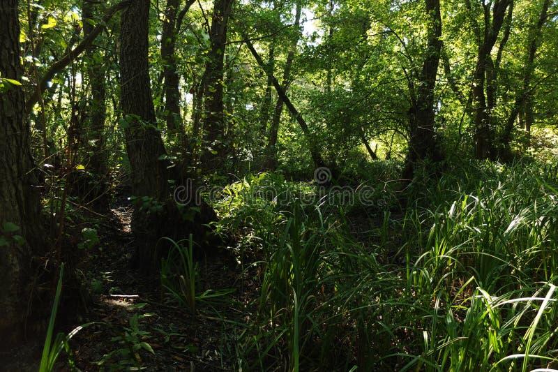 В фантастичном лесе реликвии стоковое фото