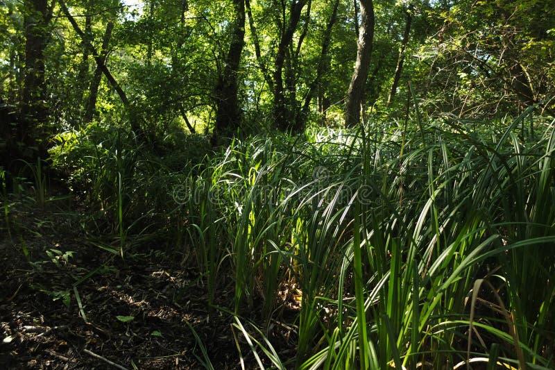 В фантастичном лесе реликвии стоковая фотография