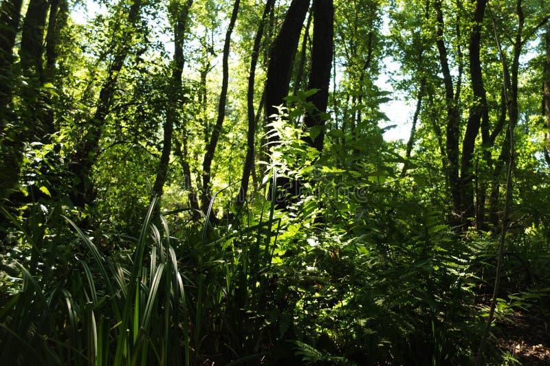 В фантастичном лесе реликвии стоковое изображение rf