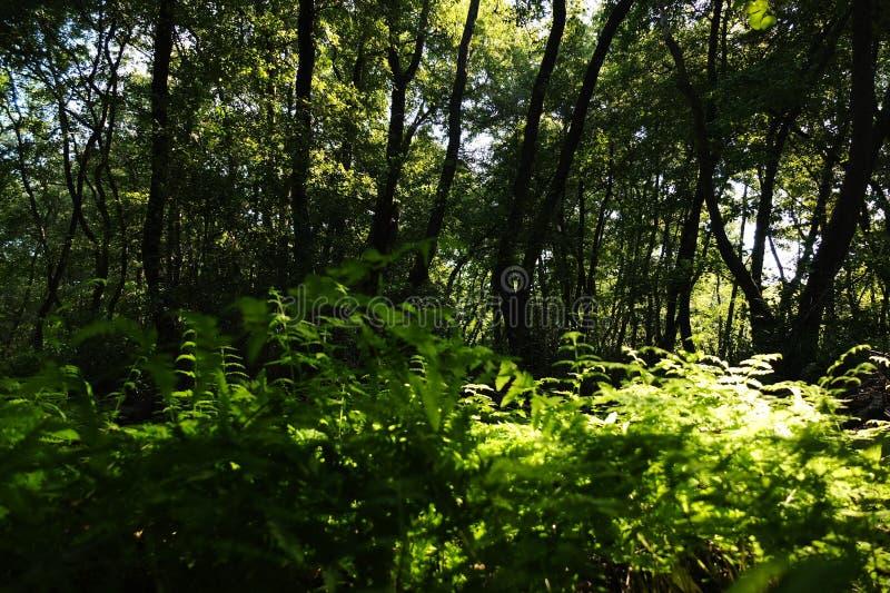 В фантастичном лесе реликвии стоковые изображения