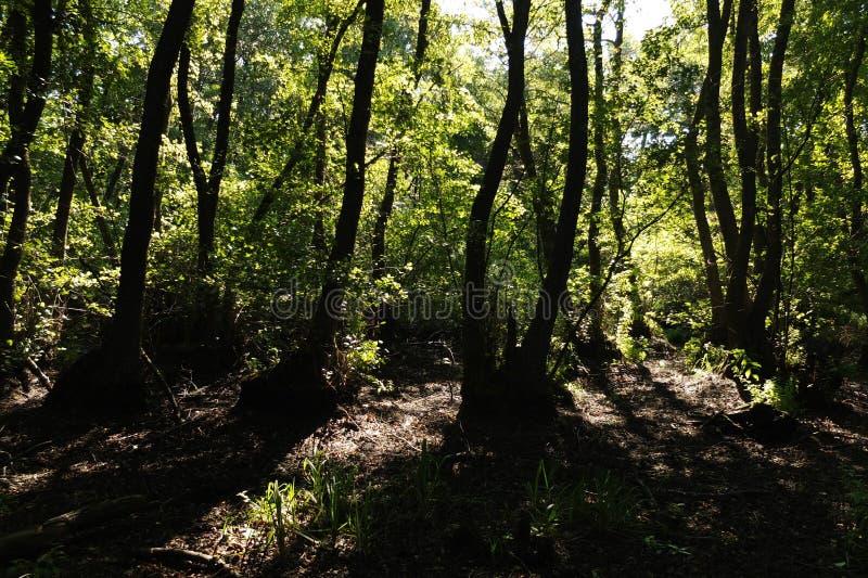 В фантастичном лесе реликвии стоковые фотографии rf