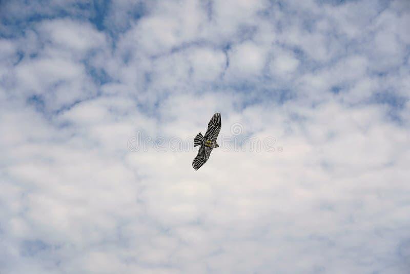 В форме орл змей летает в небо стоковые изображения rf