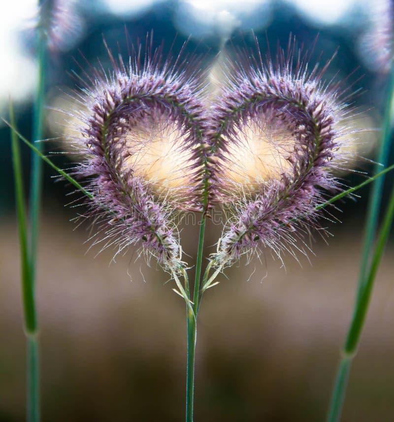 в форме Сердц розовые цветки Во время дня ` s валентинки стоковое изображение