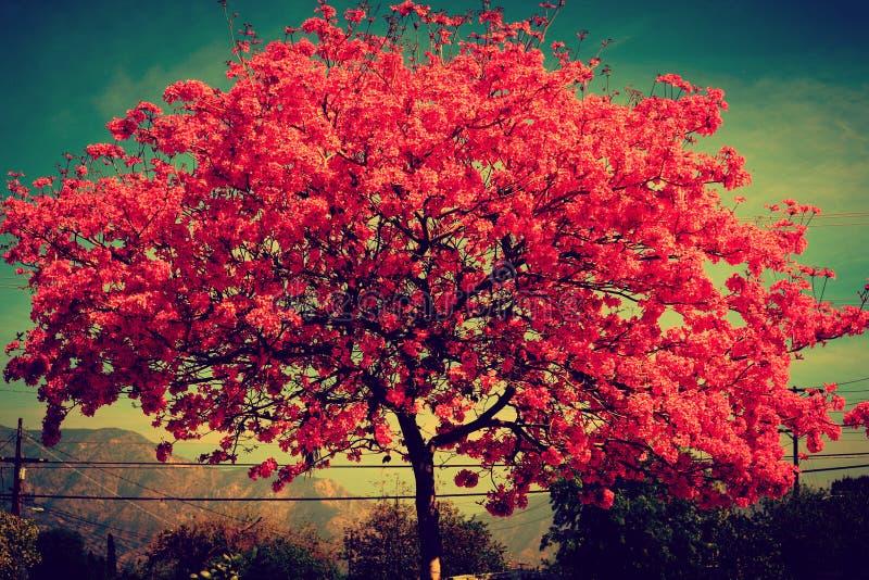 В цветени стоковое изображение