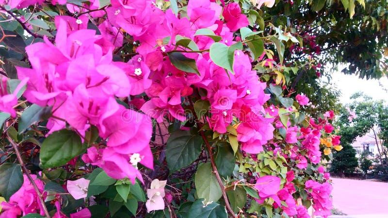 Влюбленность в саде стоковые фото