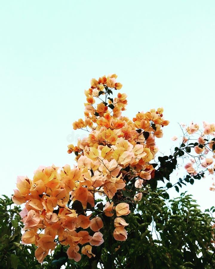 Влюбленность в саде стоковые фотографии rf
