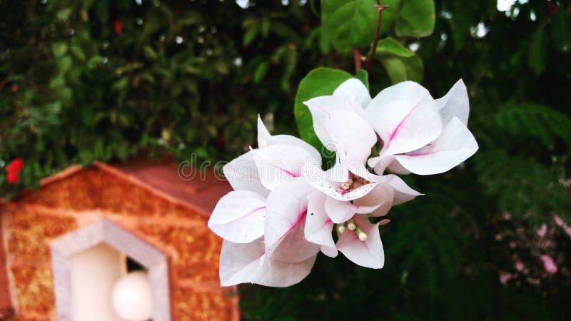 Влюбленность в саде стоковое изображение rf