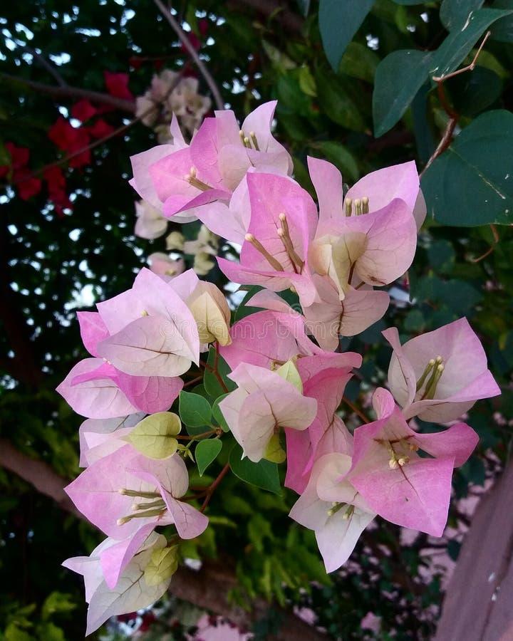 Влюбленность в саде стоковые изображения rf