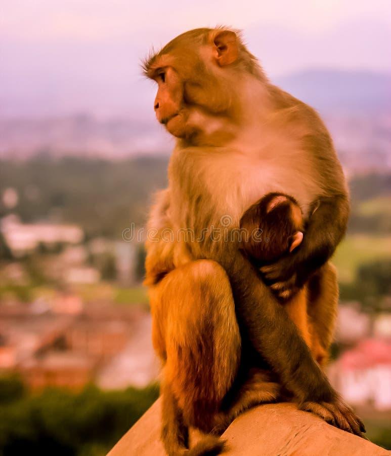 Влюбленность матери! стоковая фотография