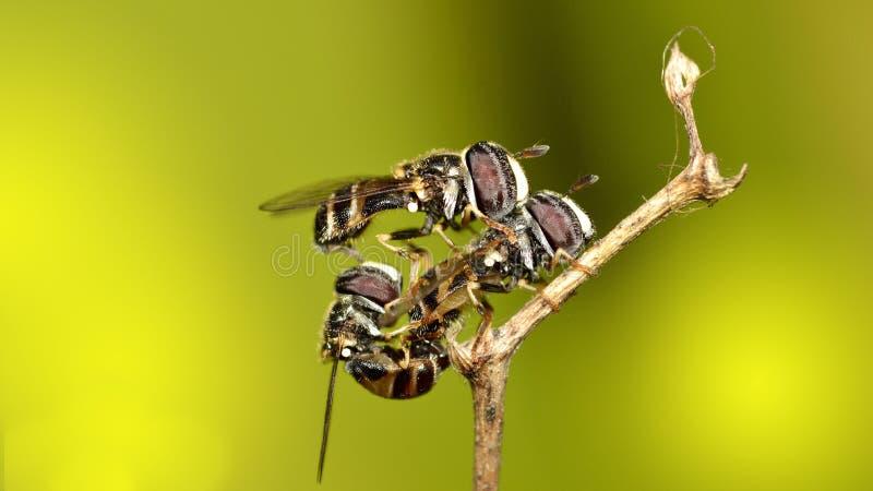 Влюбленность насекомого стоковое фото