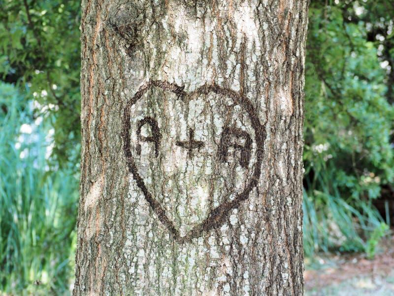 Влюбленность на дереве стоковые фотографии rf