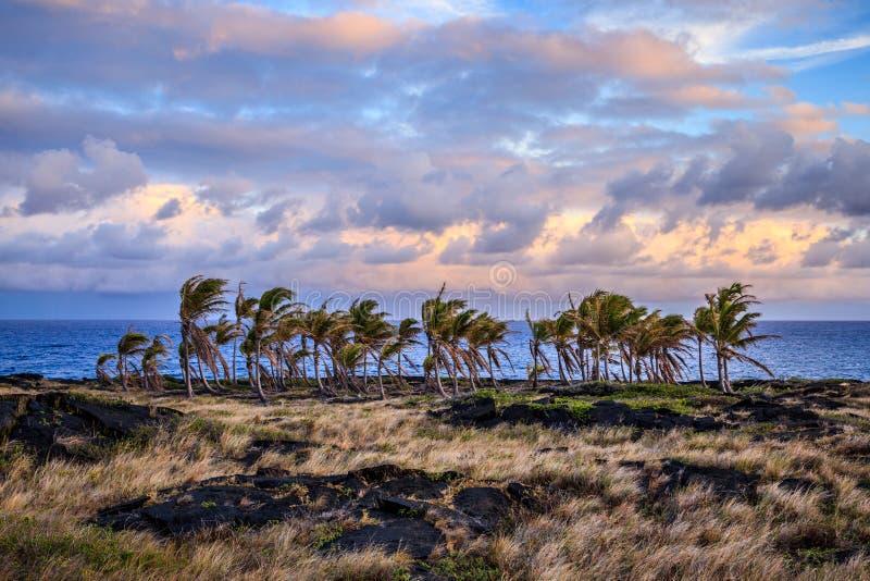 Гаваиские пальмы стоковое изображение rf