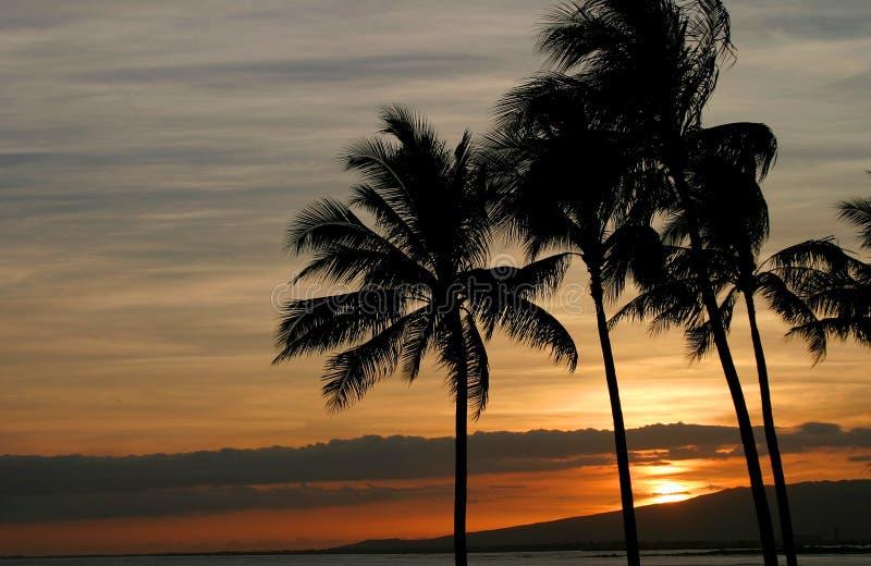 гаваиский заход солнца яркий стоковые фотографии rf