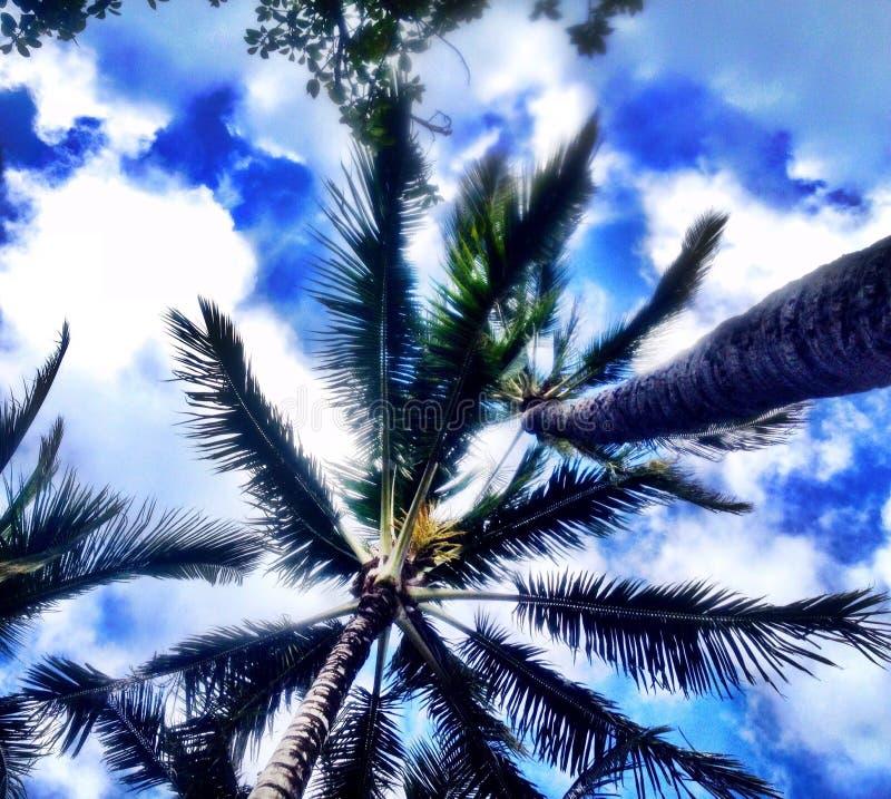 Гавайские островы honolulu стоковые изображения rf