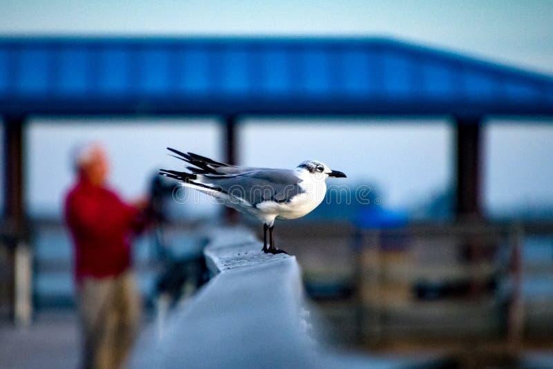 Гавань безопасности чайки моря на заходе солнца стоковое фото