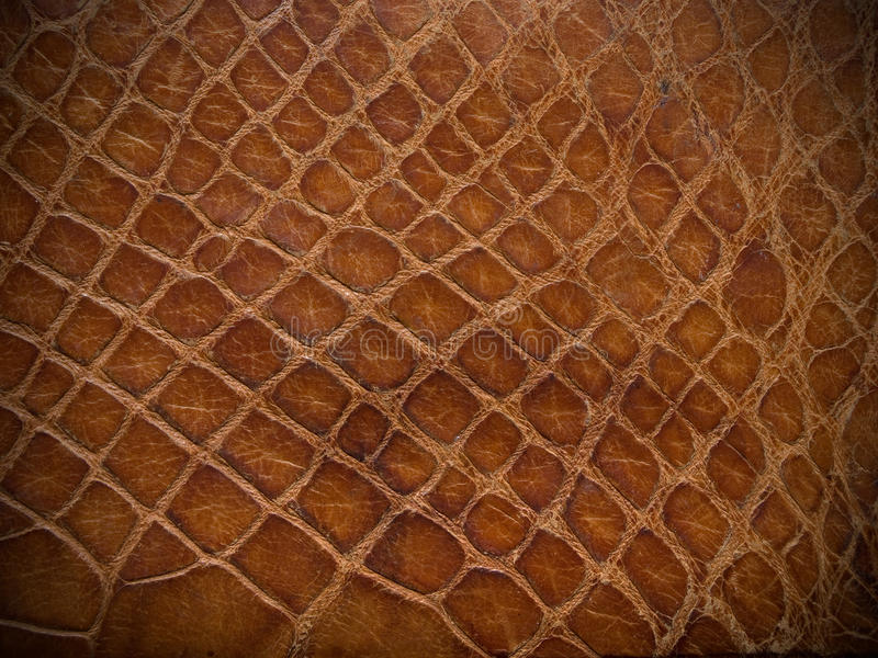 гад коричневого цвета близкий кожаный вверх стоковые фотографии rf