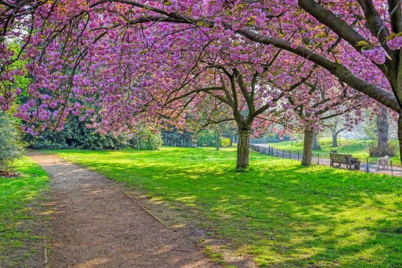 Гайд-парк в Лондоне, Великобритании стоковые изображения