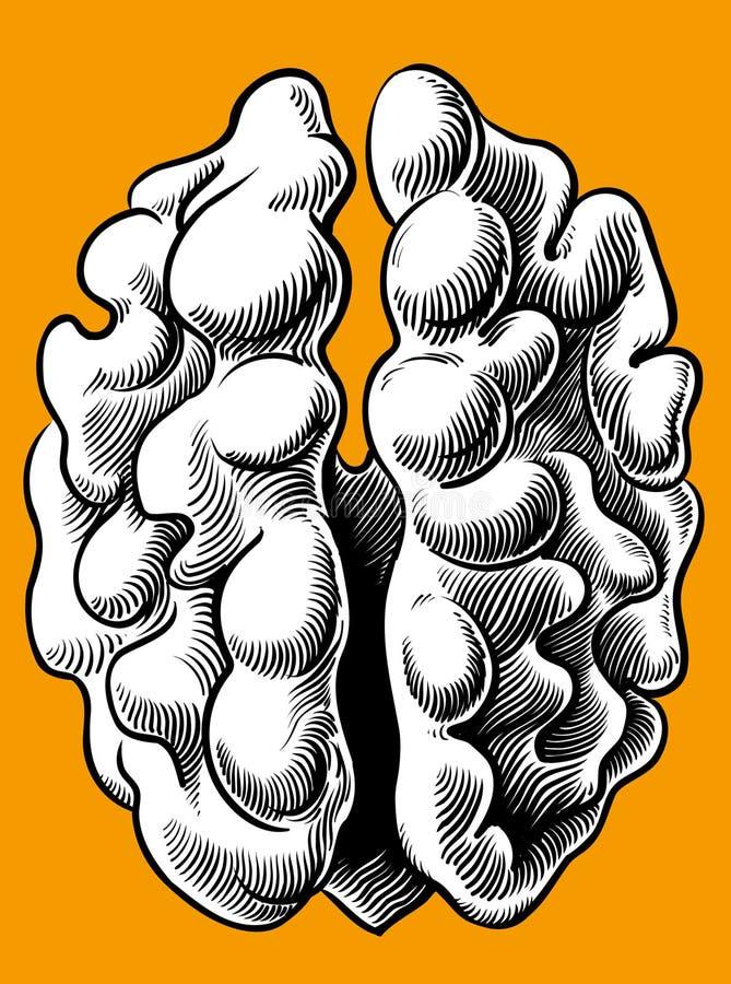 Гайка в форме человеческого мозга иллюстрация штока