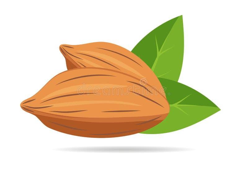 Гайка миндалины при листья зеленого цвета изолированные на белой предпосылке Плоский стиль дизайна также вектор иллюстрации притя бесплатная иллюстрация
