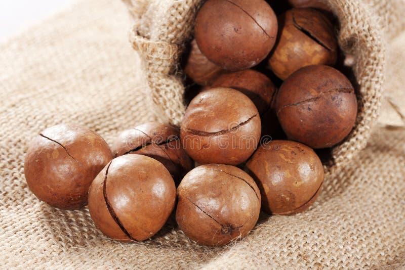 Гайка Macadamia стоковое изображение rf