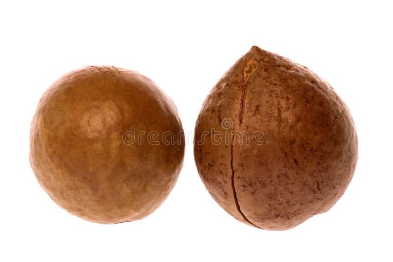 гайки macadamia стоковые изображения