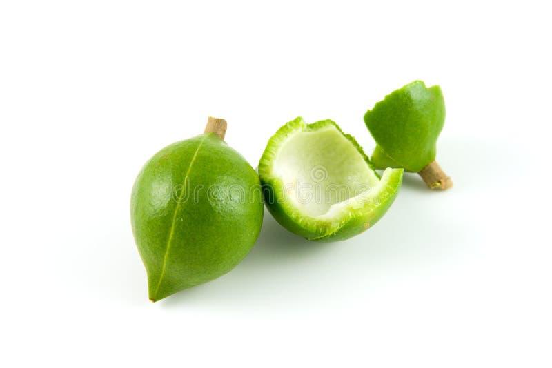 гайки macadamia стоковые изображения rf