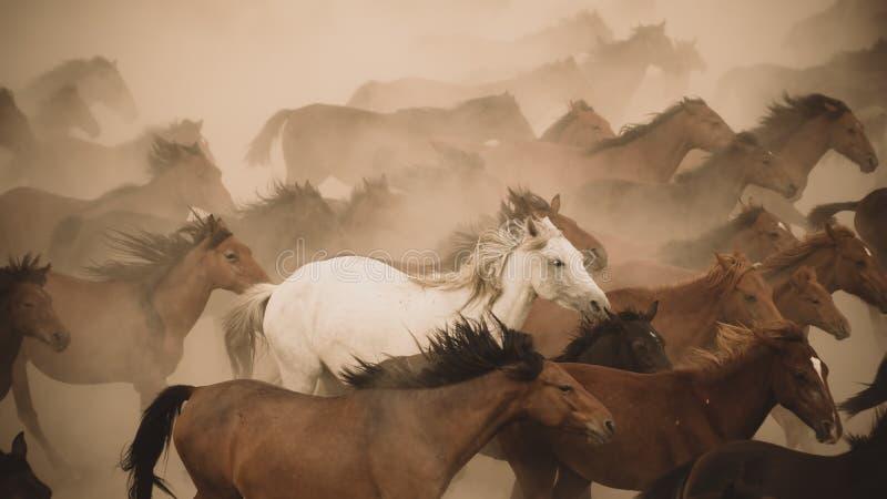 Галоп бега лошадей в пыли стоковое изображение