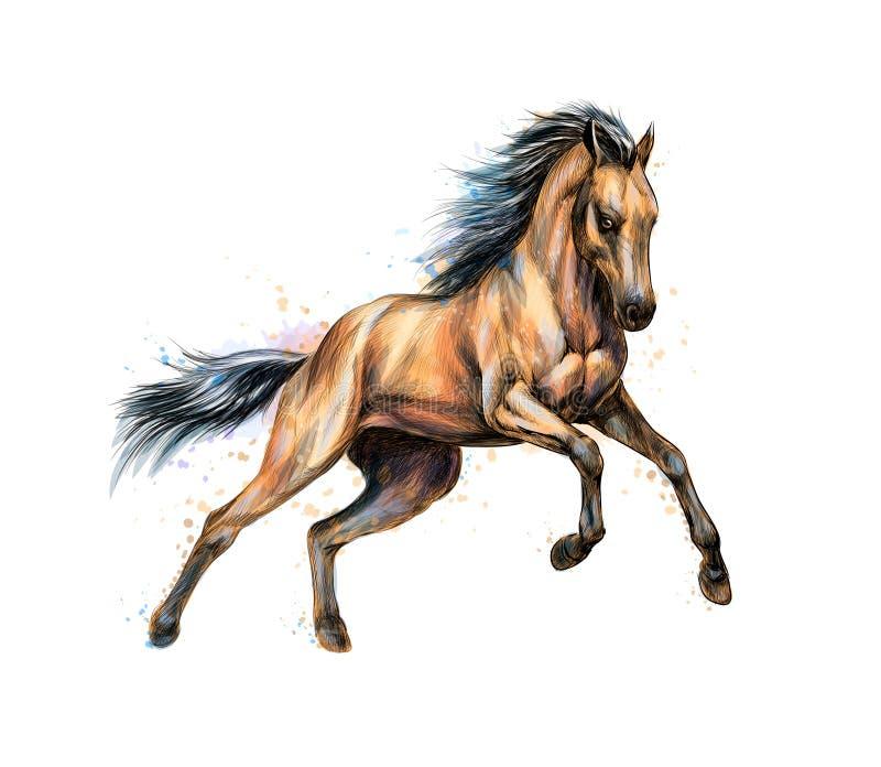 Галоп бега лошади от выплеска акварелей Эскиз нарисованный рукой иллюстрация штока