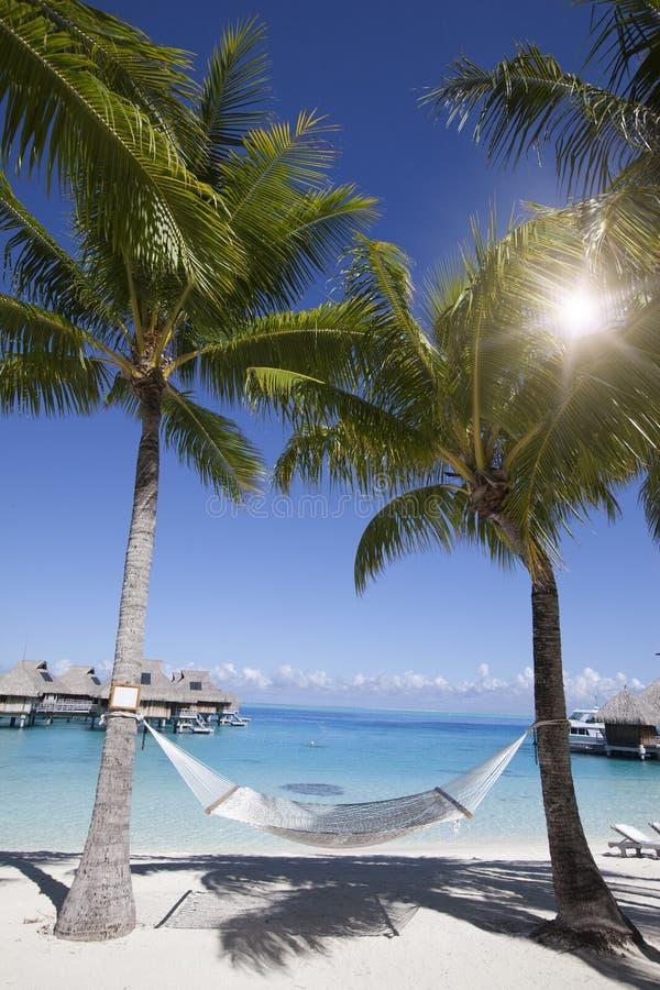 Гамак между пальмами у моря стоковые изображения rf