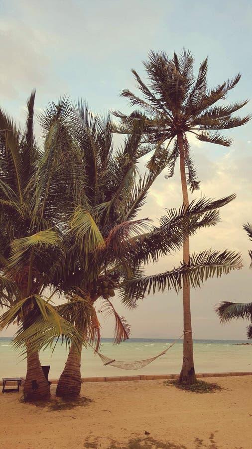 Гамак на пляже, Таиланде стоковая фотография rf