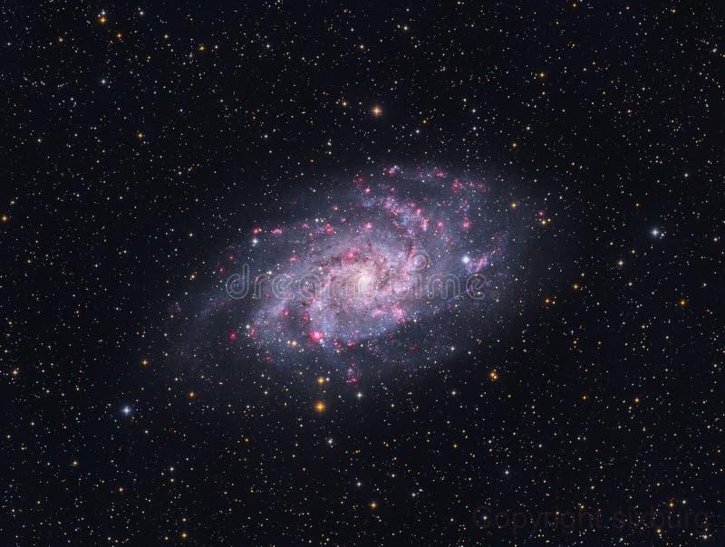 Галактика Pinwheel - M33 стоковые фотографии rf