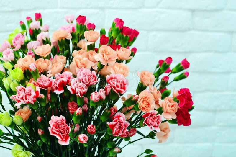 Гвоздика на розовой предпосылке стоковое фото