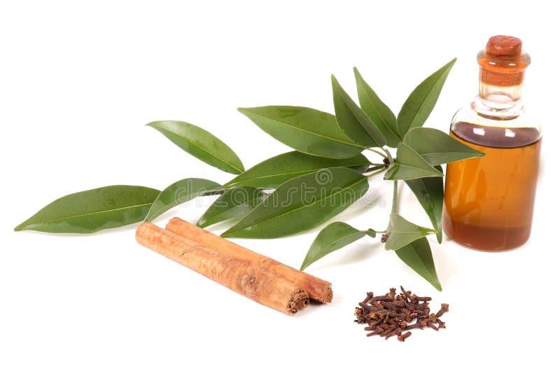 Гвоздичное дерево и коричное масло стоковое изображение