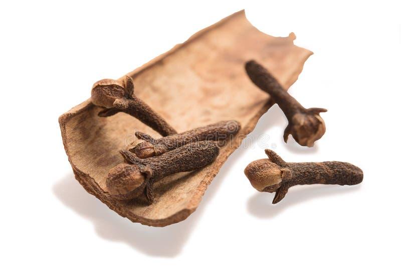 Гвоздичные деревья случайно аранжируемые в циннамоне стоковые изображения