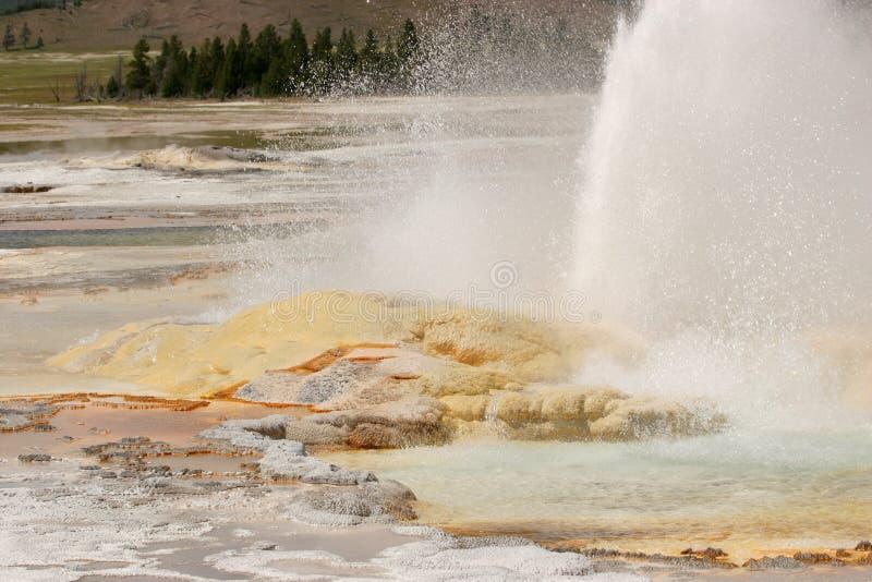 Гейзер извергая в национальном парке Йеллоустона стоковое фото