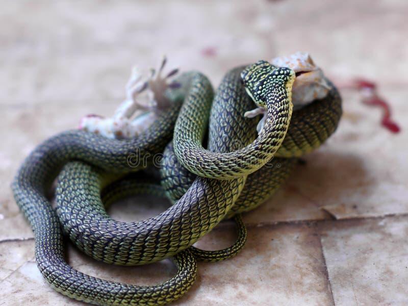 Гекконовые & змейка стоковое фото