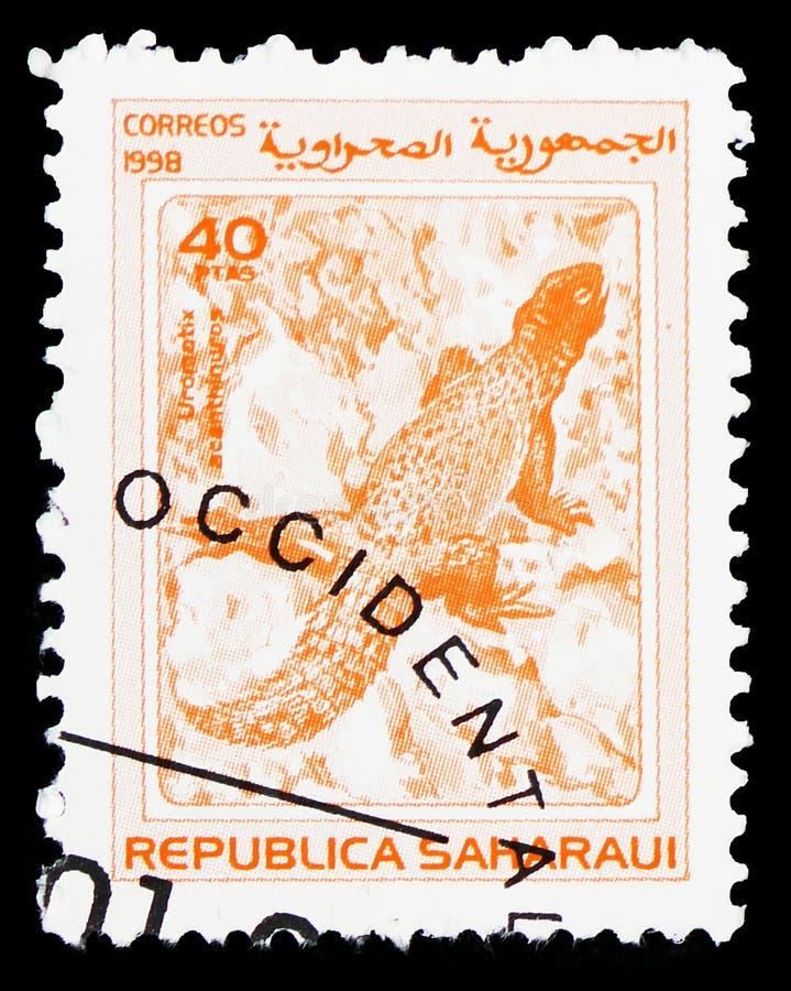 Гекконовые, serie Republica Saharaui, около 1998 стоковая фотография