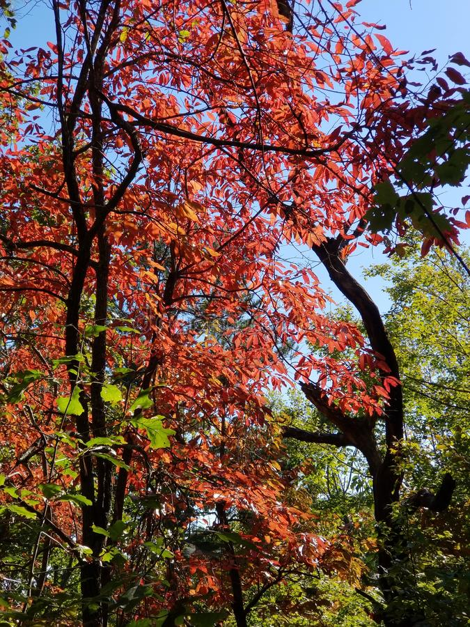 Гениальное падение красит - аппалачскую листву осени леса стоковые изображения rf